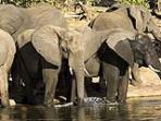 Family safari for teenagers in Botswana