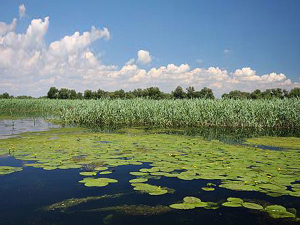 Danube Delta birdwatching vacation in Romania