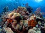 Sulawesi diving vacation in Indonesia