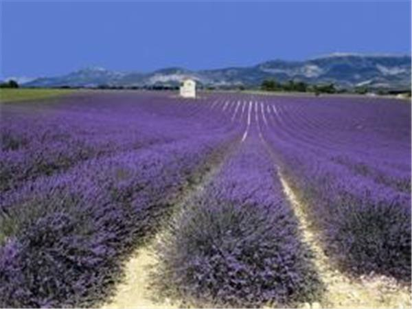 Luberon self guided walking vacation in Provence, France