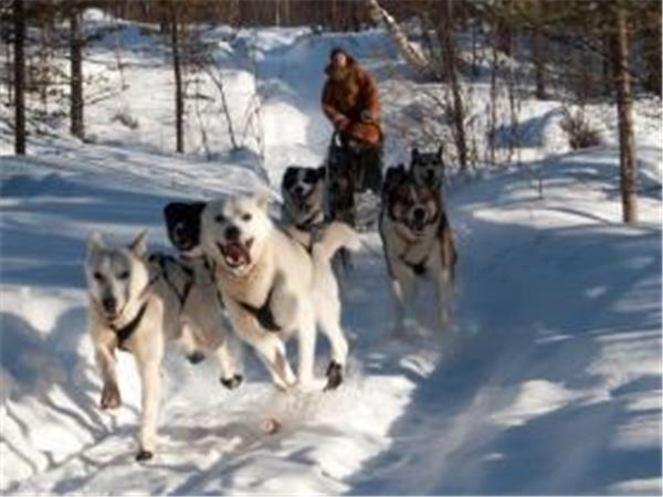 Lapland husky safari short break, Finland