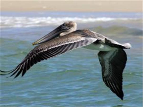 Crystal Coast birdwatching tour in North Carolina, USA