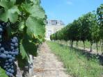 Wine tasting vacation in the Loire Valley