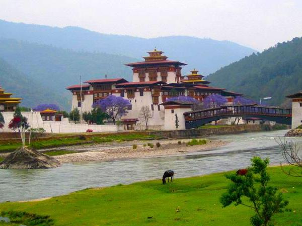 Bird watching tour in Bhutan