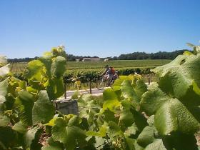 Most of the cycling is done on very quiet roads through the wine-area of Medoc