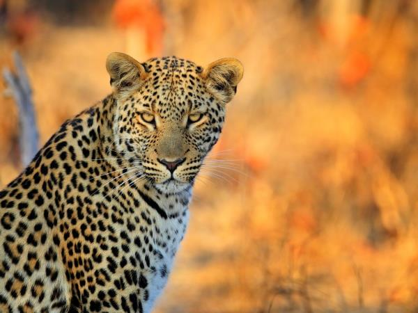 Wildlife conservation vacation in South Africa