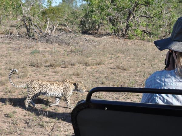 7 day big five safari in South Africa