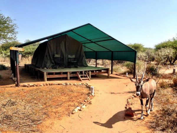 Carnivore conservation & research in Namibia