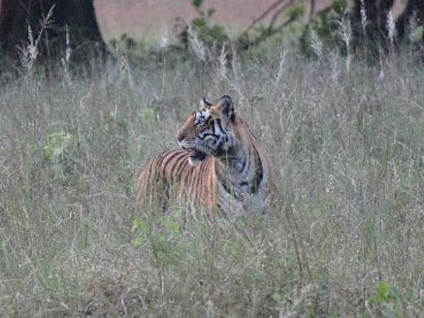 Wildlife conservation holiday in India