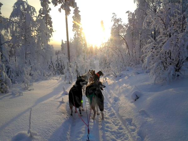 Husky Safari & the Aurora Borealis, Finland