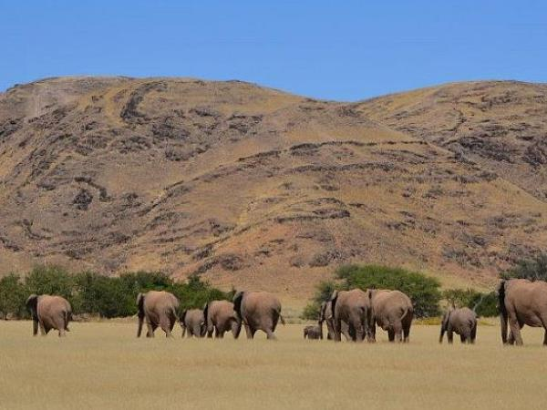 Elephant conservation project in Namibia
