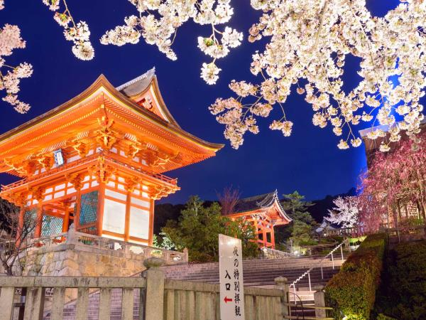Cherry Blossom luxury tour in Japan