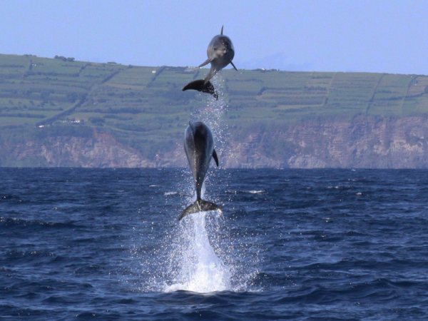 Whale conservation in the Azores