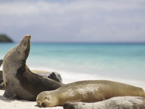 Galapagos and Machu Picchu family adventure vacation