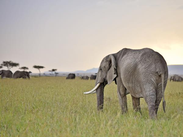 Kenya Safari & Seychelles luxury honeymoon