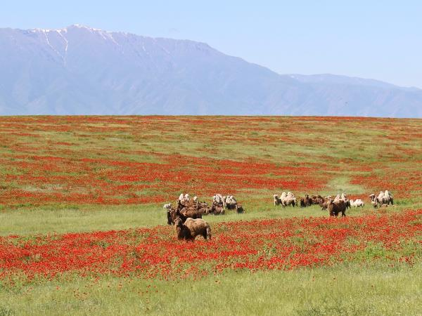 Kazakhstan holiday, Steppe to the Silk Road