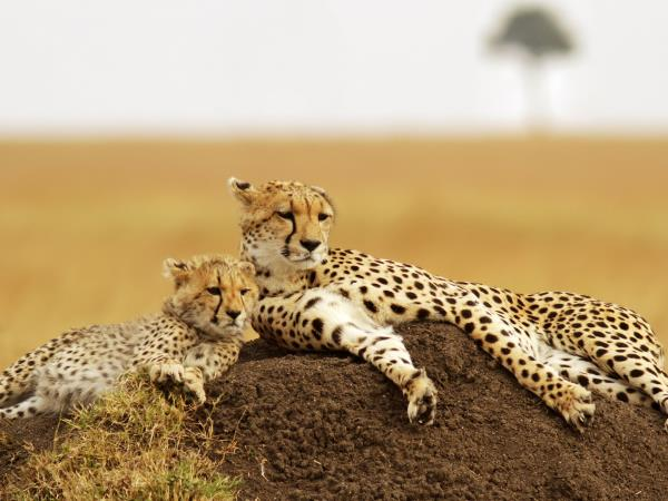 Kenya luxury safari vacation