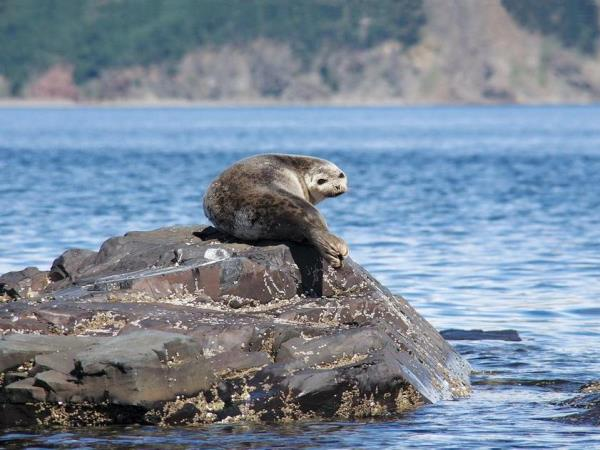 Shantar Islands Wildlife expedition in Russia