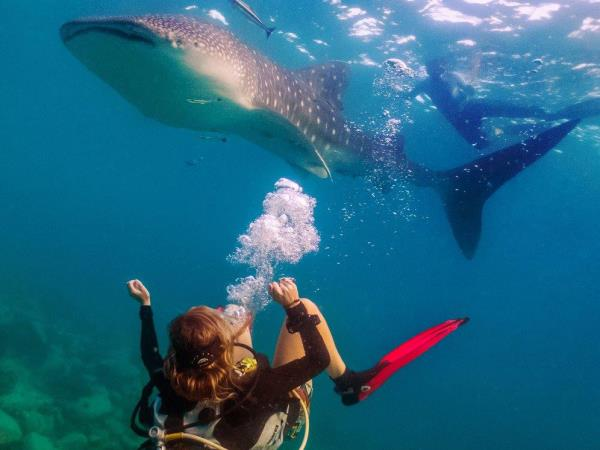 Marine conservation vacation in Thailand