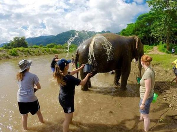 Thailand elephant conservation holiday
