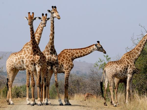 South Africa, Garden Route & safari vacation