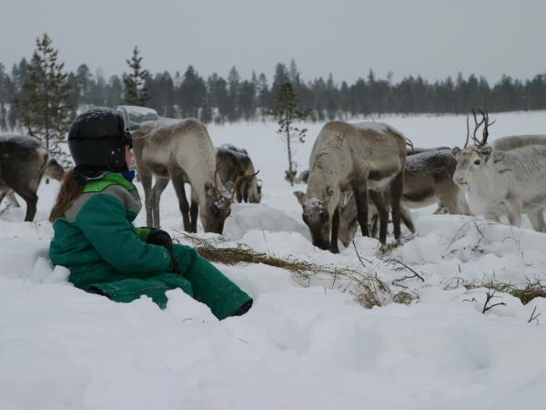 Magical Adventure in Lapland