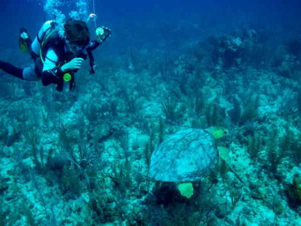 Marine conservation vacation in Belize