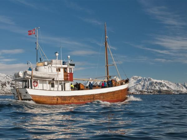 Lofoten Islands whale watching & fishing vacation, Norway