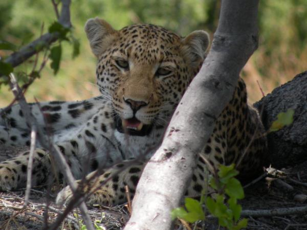 Southern Africa luxury wildlife & beach vacation