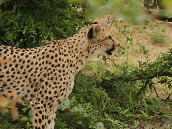 Zimbabwe safari holiday, tailor made