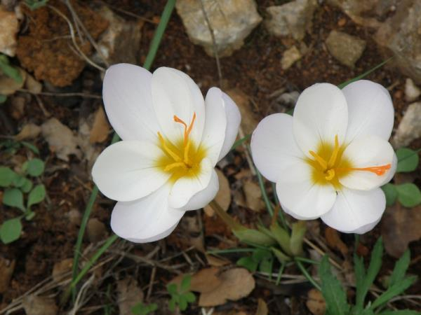 Peloponnese nature vacation, autumn flowers