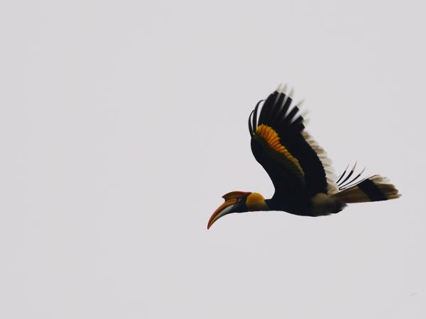Kerala birdwatching vacations, Western Ghats
