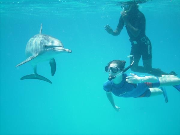 Swim with dolphins in Egypt