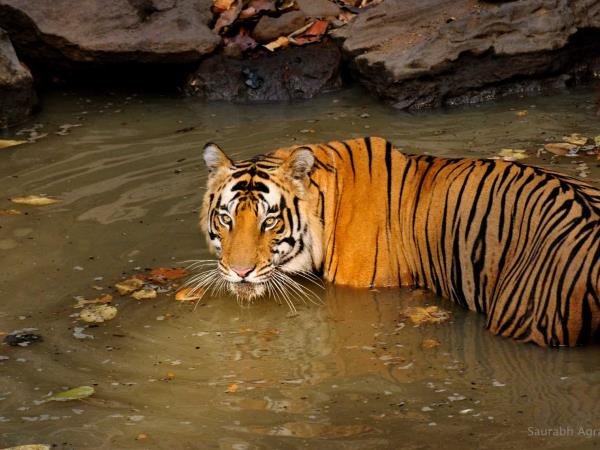 Wildlife holiday in Central India
