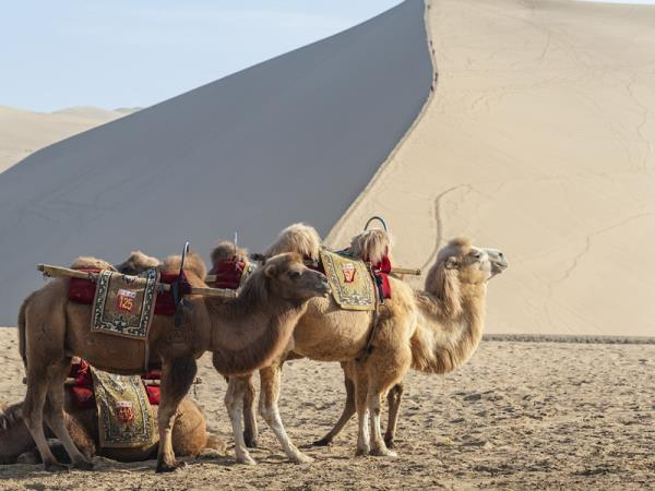 Silk Road tailor made vacation