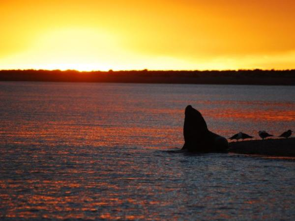 Patagonia wildlife & cultural vacation, tailor made