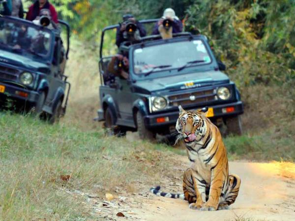 Tiger & wildlife tour in Central India