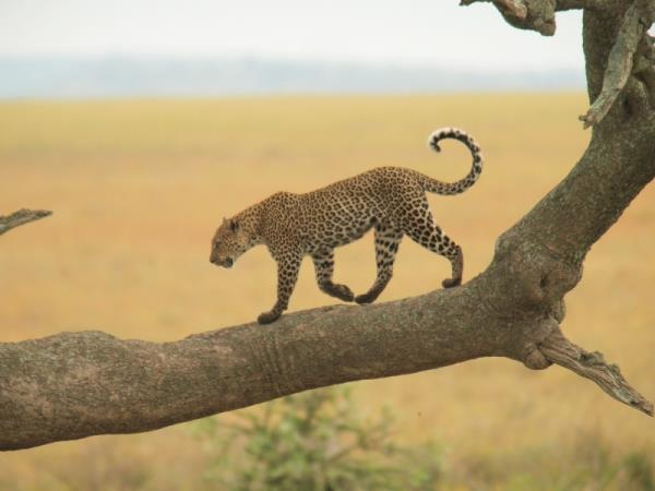 Tanzania camping safari, Serengeti and Ngorongoro crater