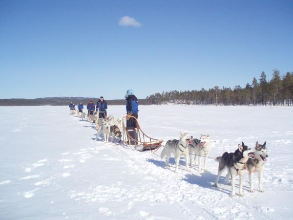 Finnish Lapland winter vacation, husky safari