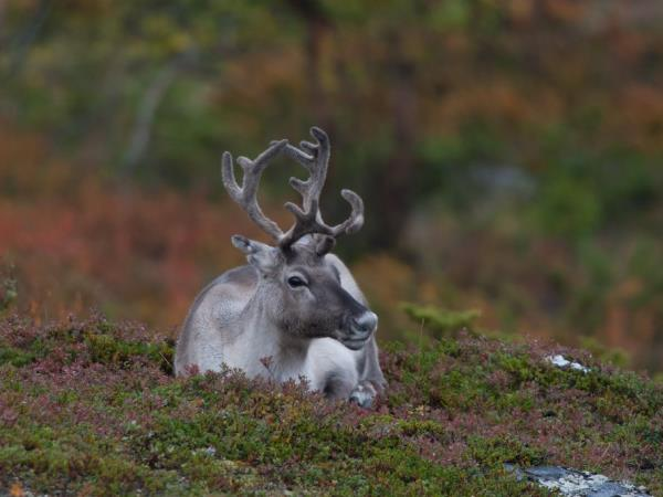 Lapland photography vacation, Fall colours