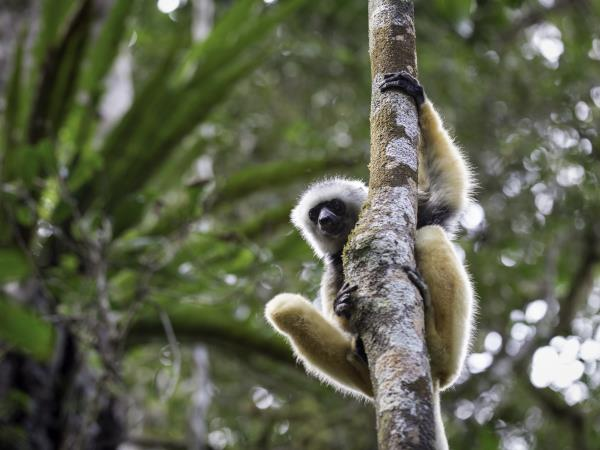 Madagascar small group expedition with Hilary Bradt