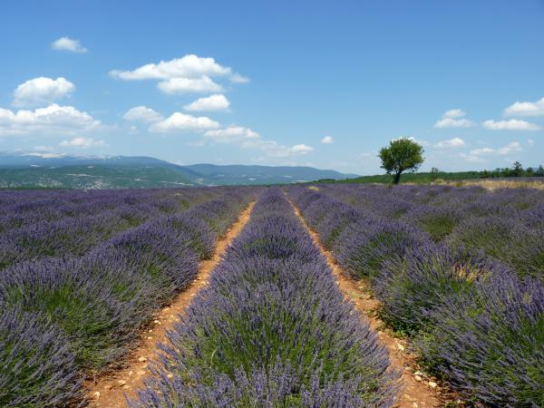 Provence self drive vacation, France
