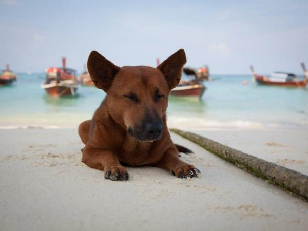 Volunteer with animals in Thailand
