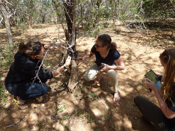 Research volunteering with leopards in South Africa