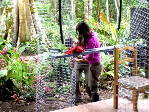 Volunteering with monkeys in Ecuador