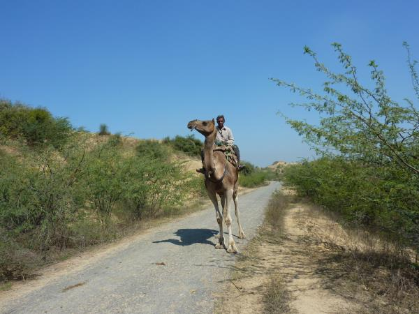 Rajasthan private vacation
