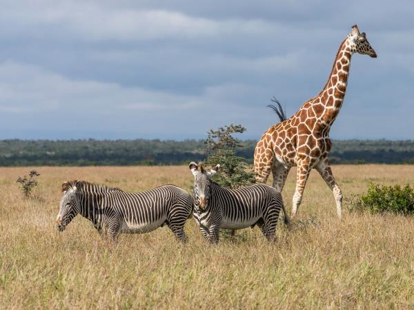 Kenya family safari holiday, Wildlife & Beaches