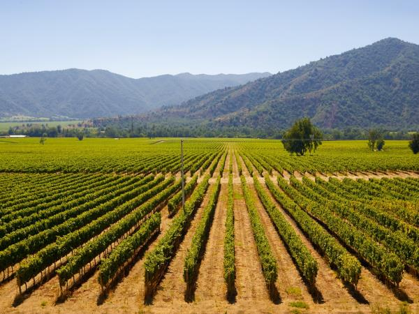 Chile tailor made vacation, Santiago, wineries and the coast