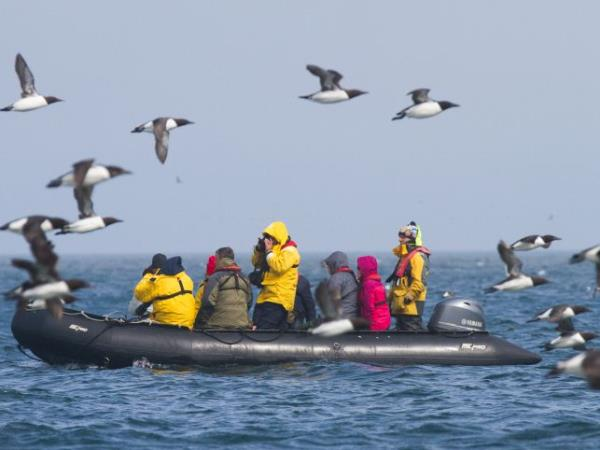 Sea of Okhotsk wildlife cruise, Russia