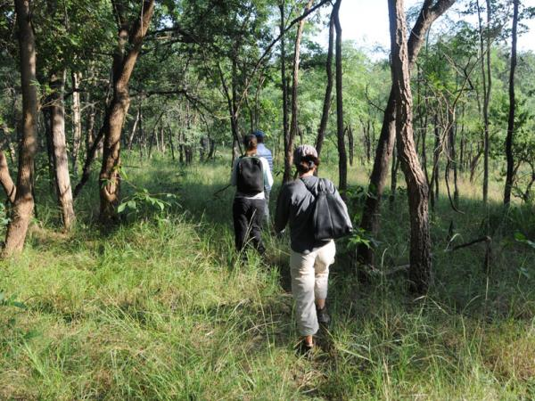 Central India vacation, tigers and jungles